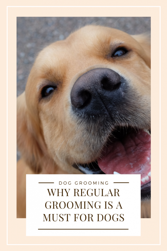 Why Regular Grooming Is A Must For Healthy Dogs