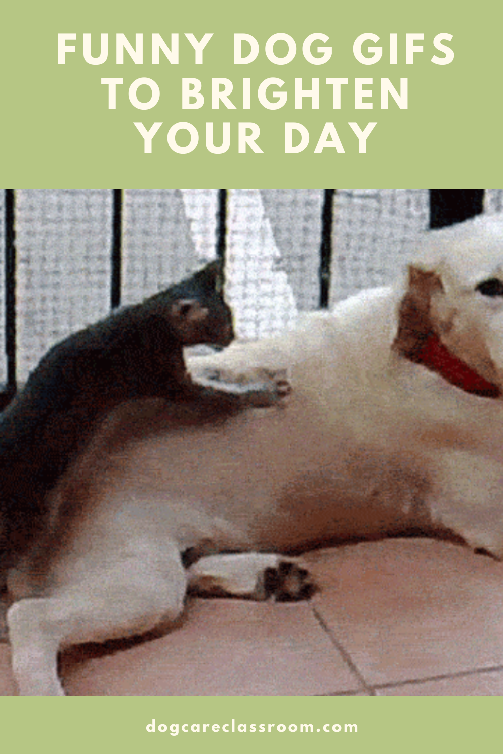 10 Funniest Animated Dog Gifs You Have To See To Believe