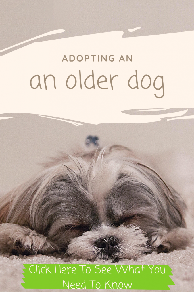 Adopting An Older Dog – What You Need To Know