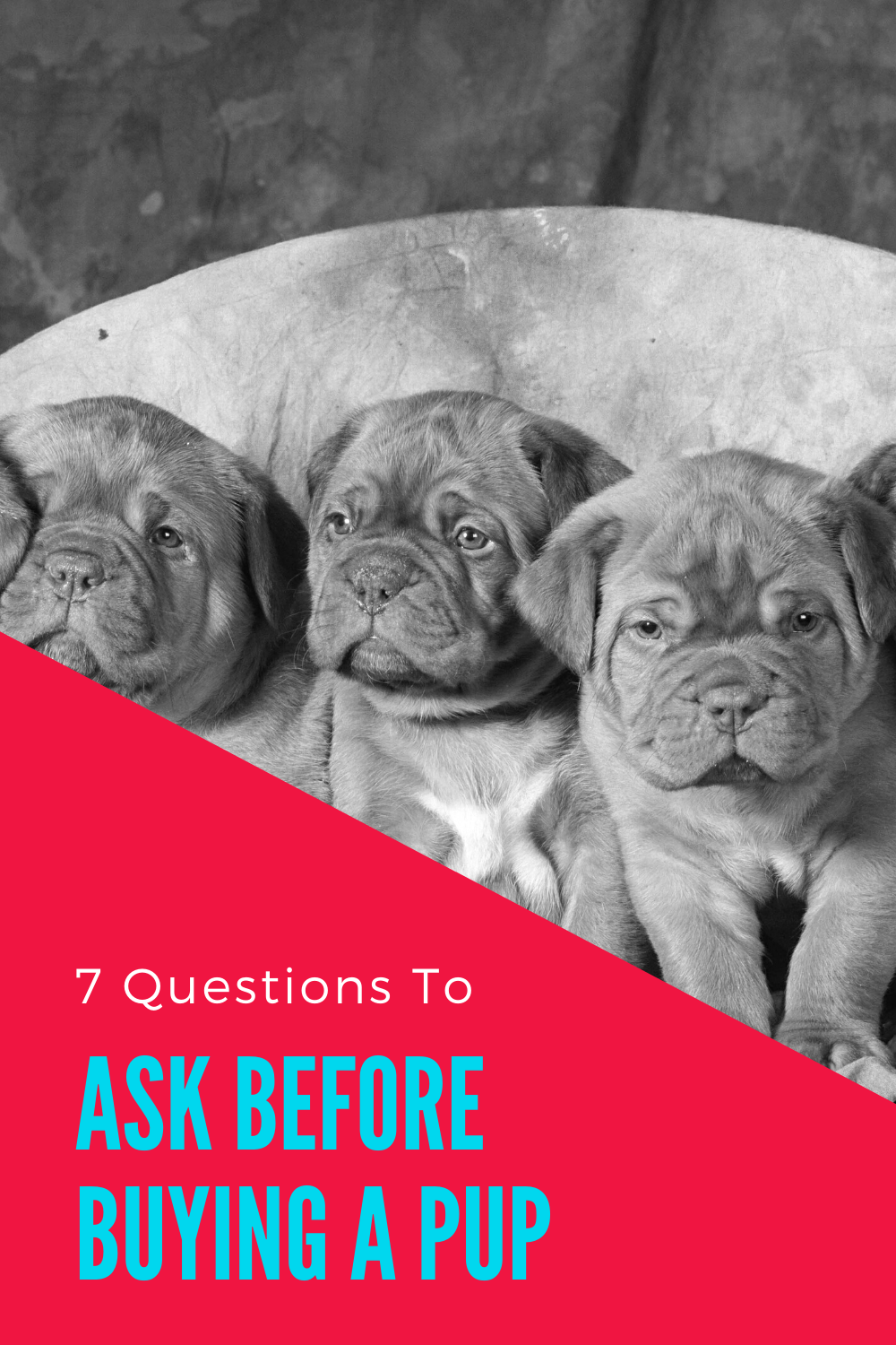 7 Questions To Ask When Buying A Puppy