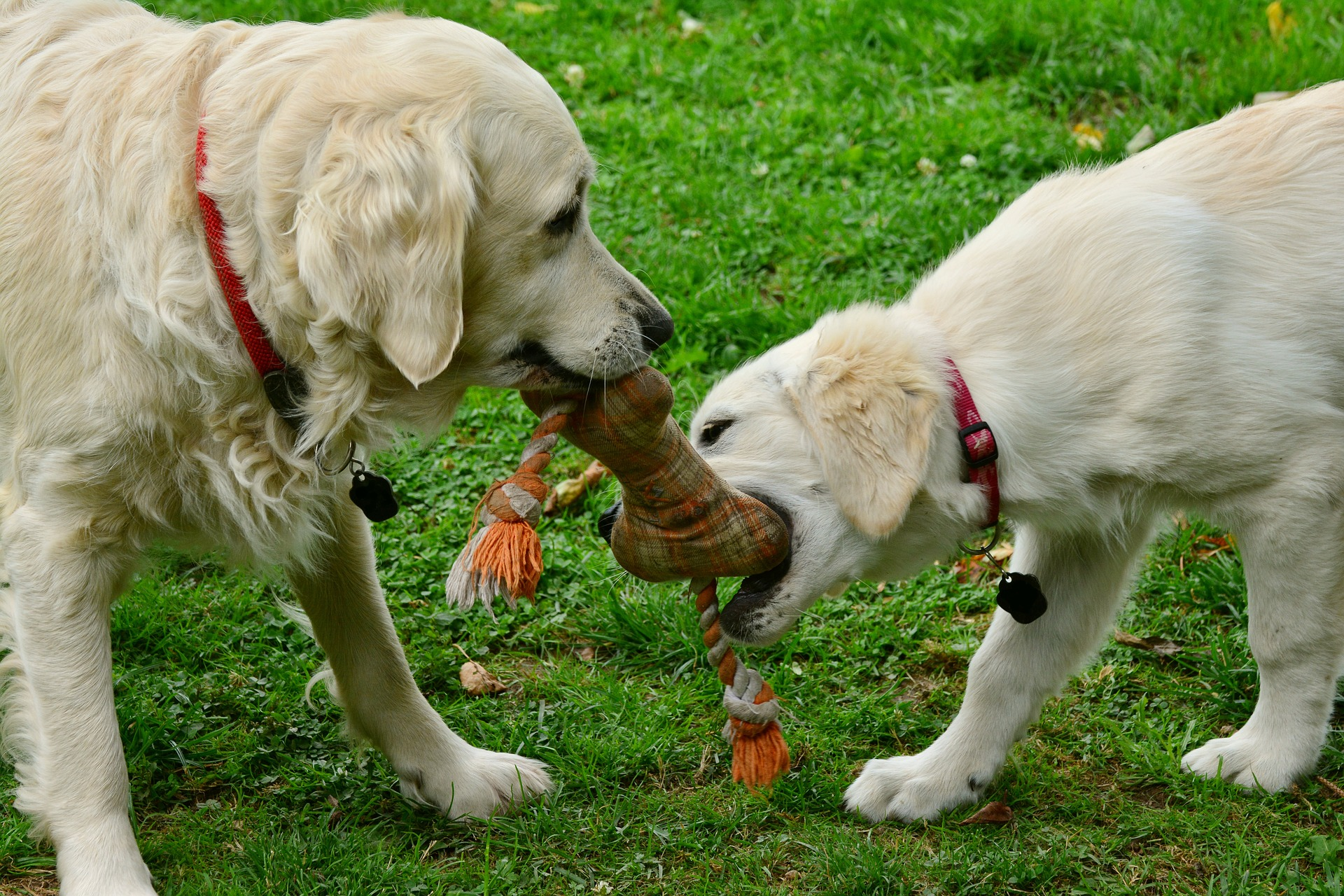 Dog Toys – Determining Which Toys Are Dangerous