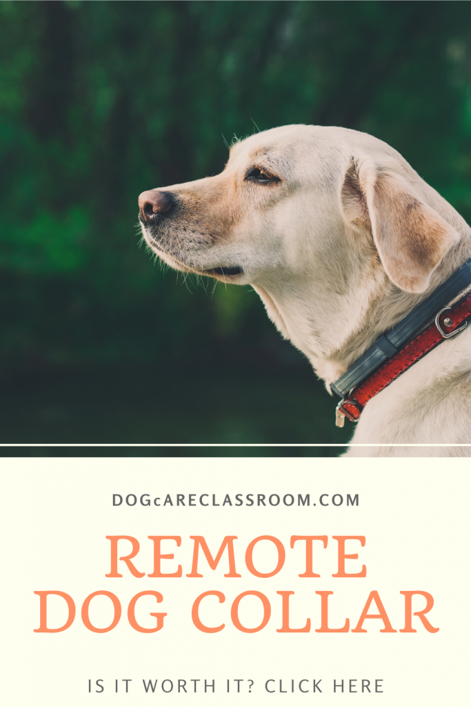 Remote Dog Collars – How Do They Work?