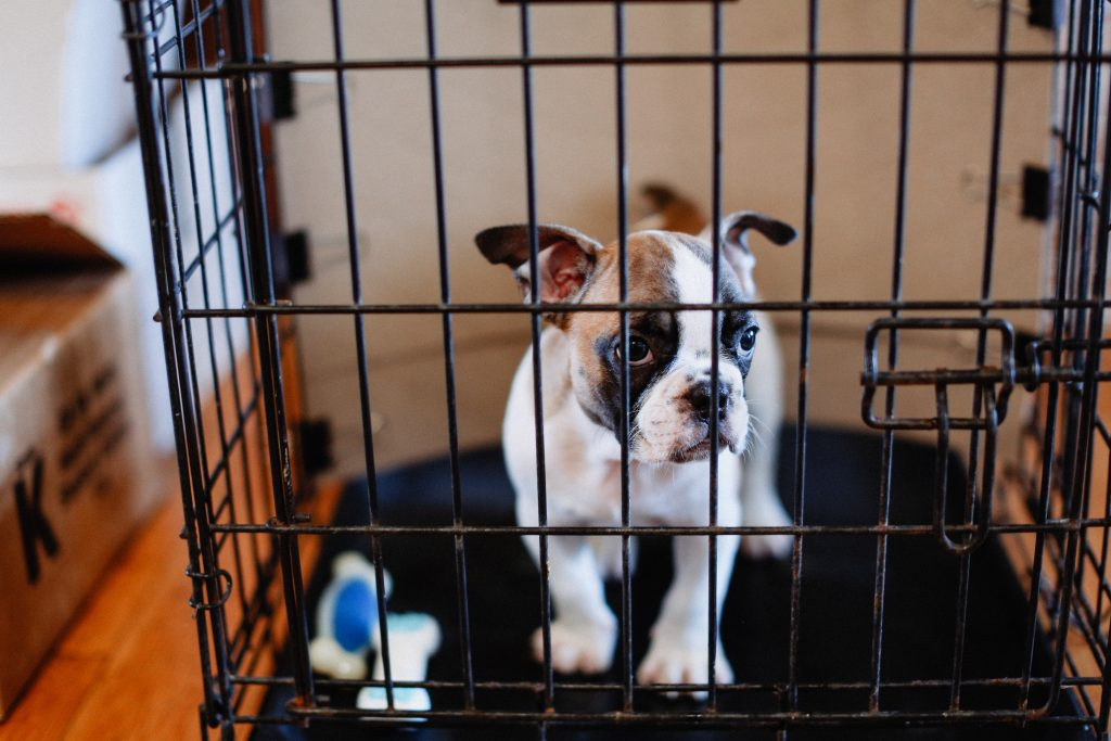 Best Options For Crate Training Your Dog That You Should Follow