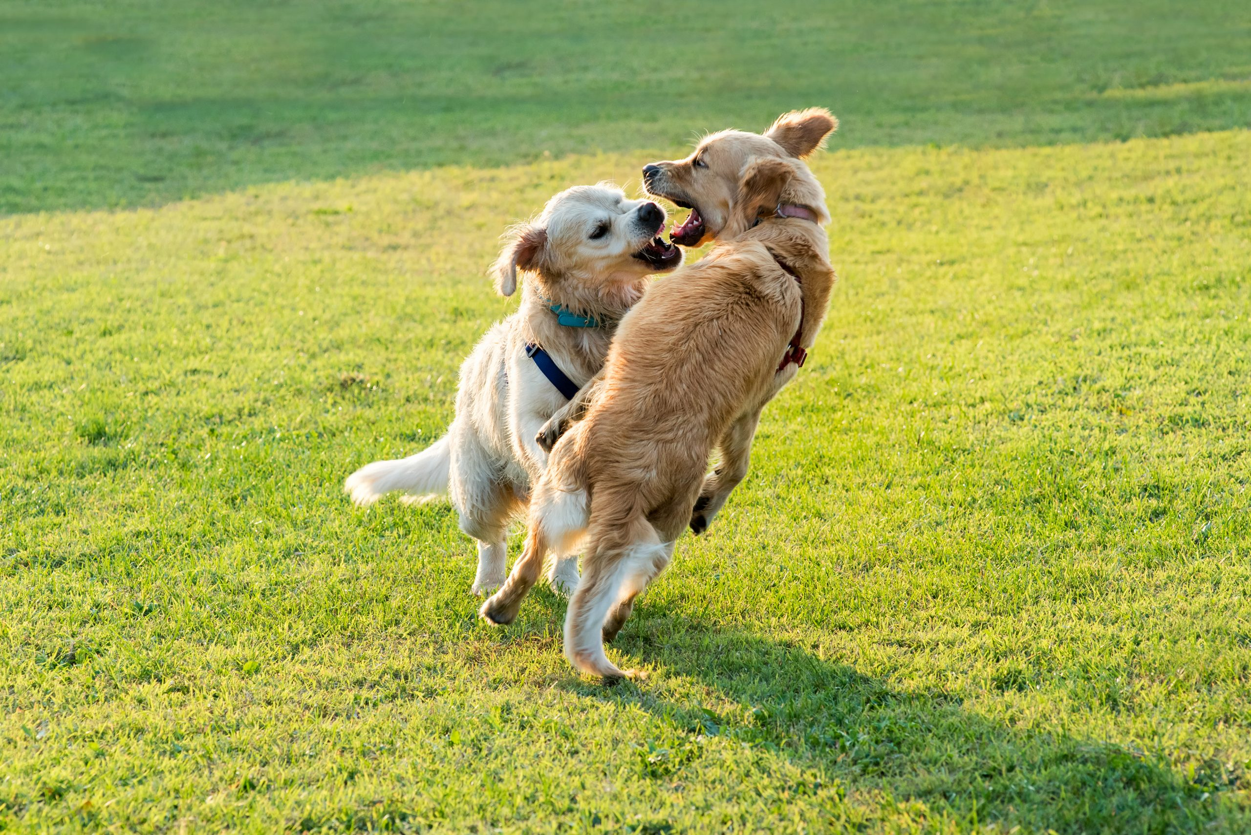 Best Ways To Stop Dogs From Biting – Learn These Tricks