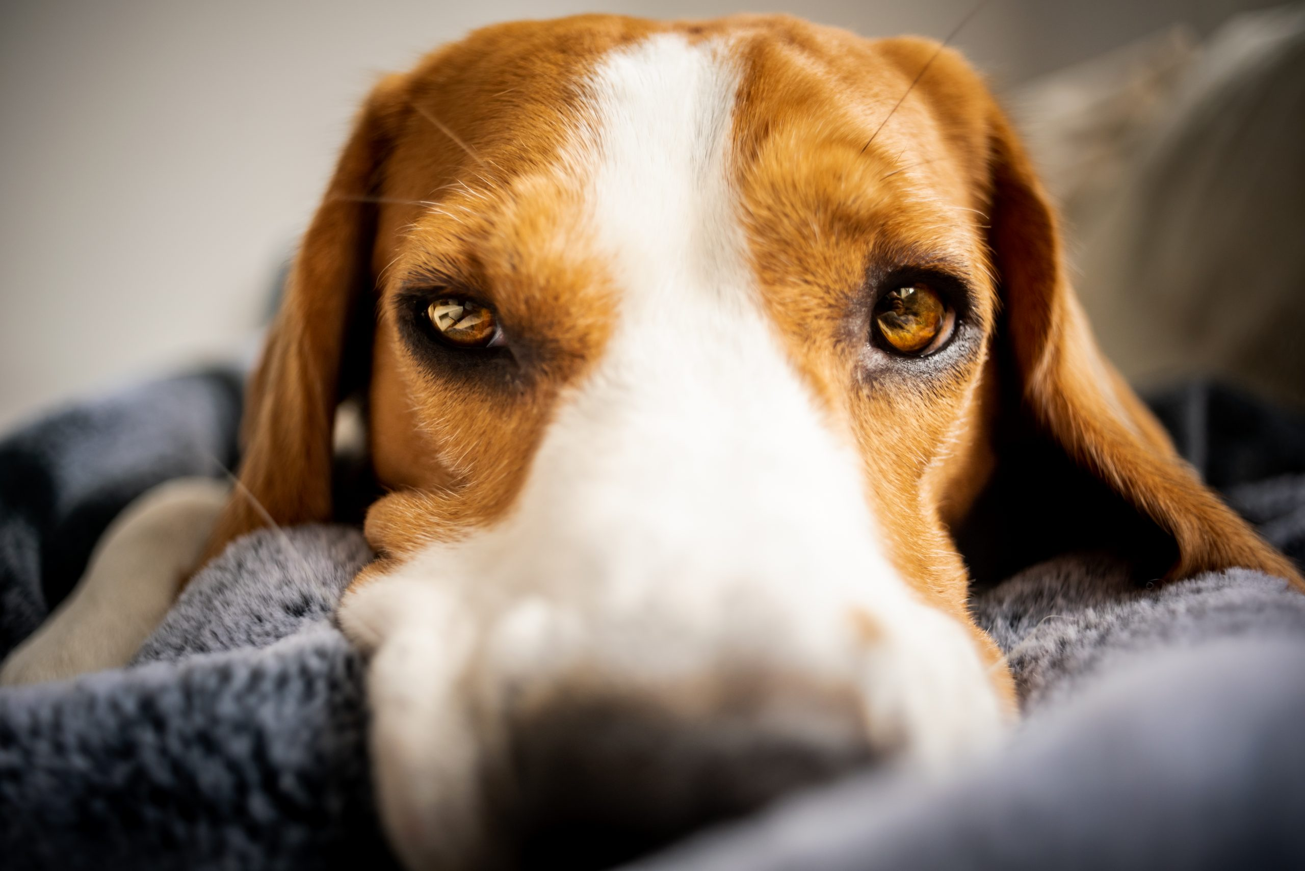 Cancer In Dogs – The Signs And Symptoms You Should Know
