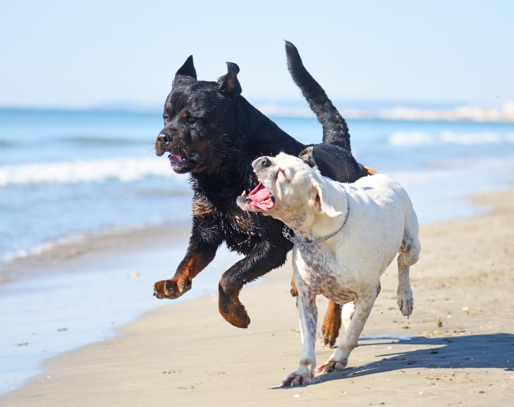 Best Ways To Stop Dogs From Fighting With Each Other