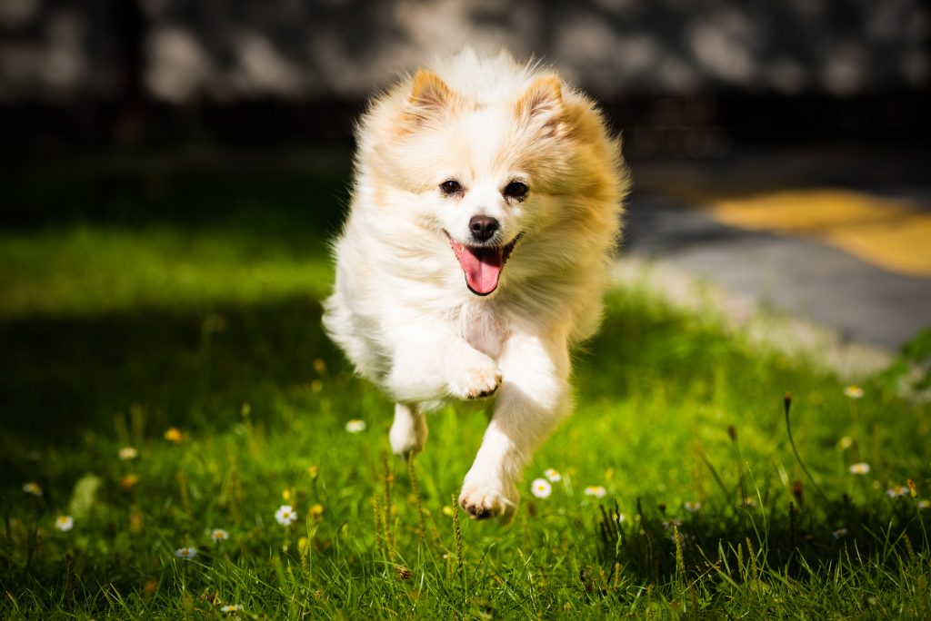 Tips To Help Your Dog Stop Jumping On Strangers