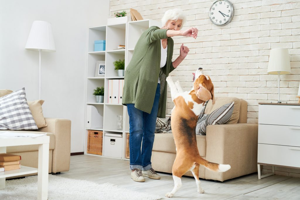 Basic Dog Commands – How to Teach a Dog to Sit, Stay & More!