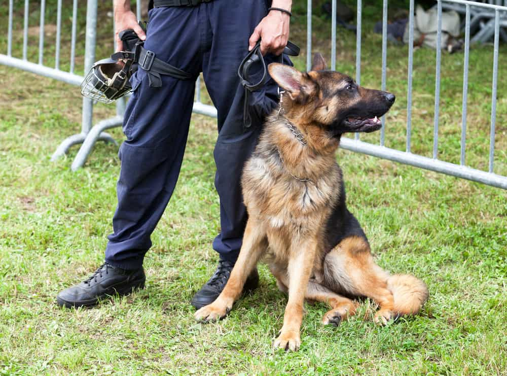 Training Dogs To Be Be Police Dogs – How Does It Work?