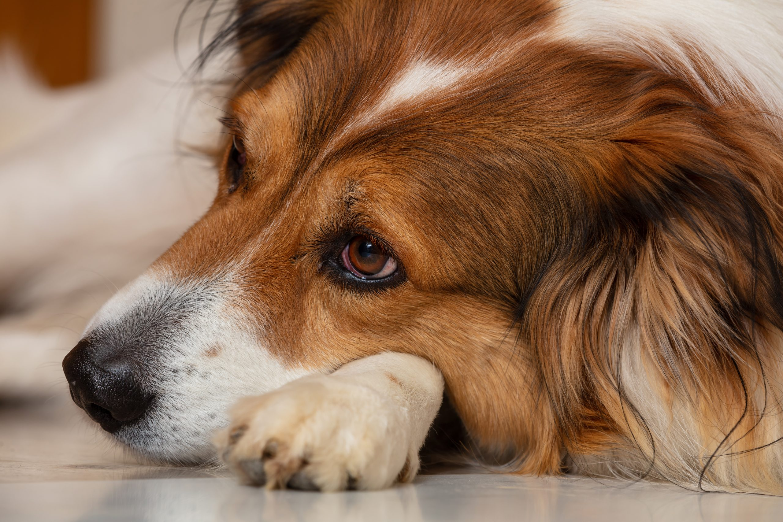 How To Deal With Dog Separation Anxiety – Follow These Tips